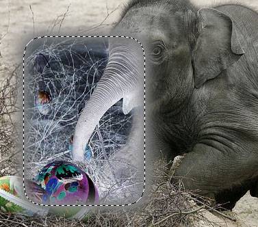 elephant with feathering